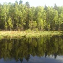 Земельные участки: 5 га под базу отдыха на берегу лесного озера